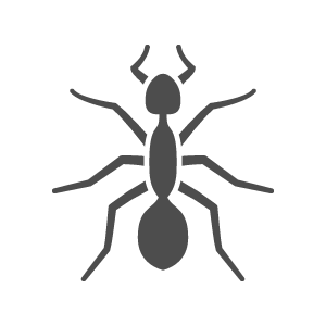 Learn More About Ants
